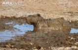 By Tony Crocetta at Biosphoto - http://www.biosphoto.com/
