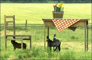 horseshelter as advertisement Time