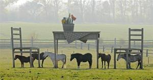 horseshelter as advertisement