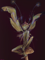 Garden Fairy by Brian Froud - http://worldoffroud.smugmug.com/